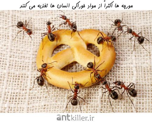انتقال بیماری از مورچه ها