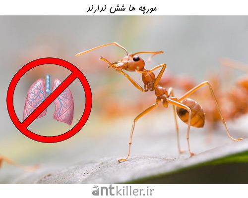 زندگی مورچه