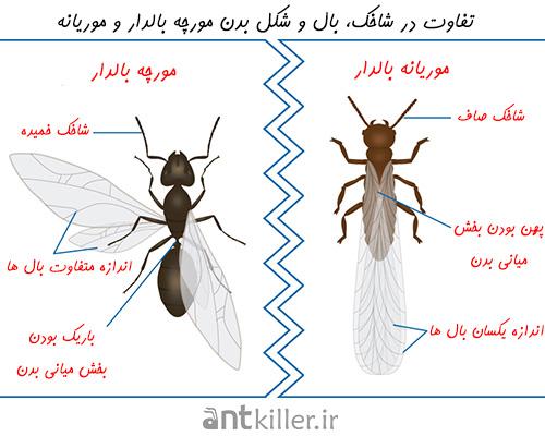 تفاوت مورچه های بالدار و موریانه های بالدار