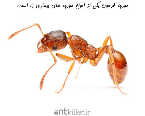 انتقال بیماری از مورچه
