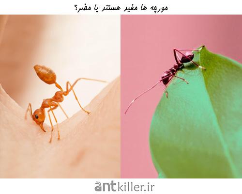 فواید و مضرات مورچه - گزش مورچه