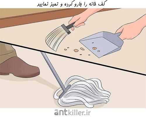 تمیز کردن خانه، راهی برای جلوگیری از تهاجم مورچه