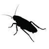 cockroach-logo