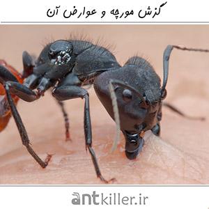 Ant Bite Main