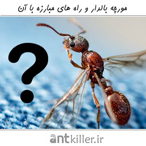 Get Rid Of Flying Ants2