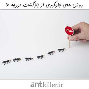 روش های جلوگیری از بازگشت مجدد مورچه ها