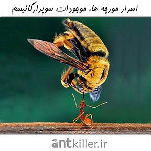 اسرار مورچه ها، موجودات سوپرارگانیسم