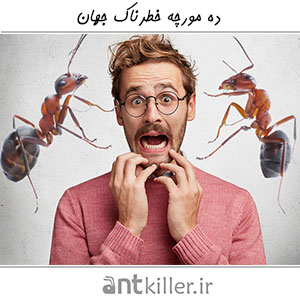 ۱۰ Most Dangerous Ants In The World 1