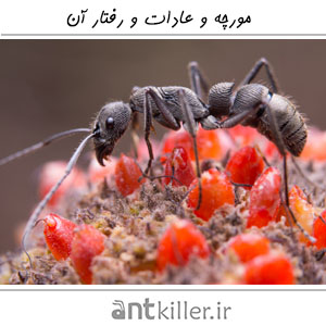 Ant And Its Treatment