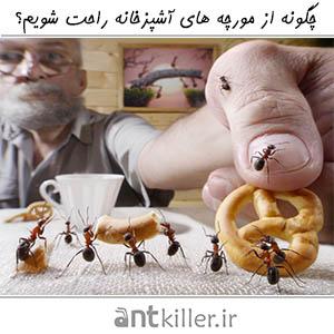 چگونه از مورچه های آشپزخانه راحت شویم؟